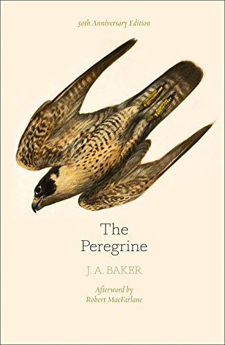 The Peregrine: 50th Anniversary Edition: Afterword by Robert Macfarlane von Harpercollins Uk; William Collins