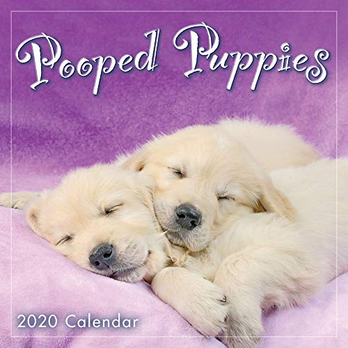 2020 Pooped Puppies Mini Calendar: By Sellers Publishing von SELLERS PUBLISHING, INC.
