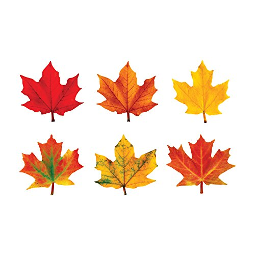 Trend Enterprises T-10958 Klassische Akzente Maple Leaves-Variety Pack-Discovery- von Trend Enterprises Inc.